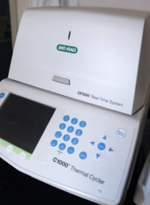 BZ_PCR
