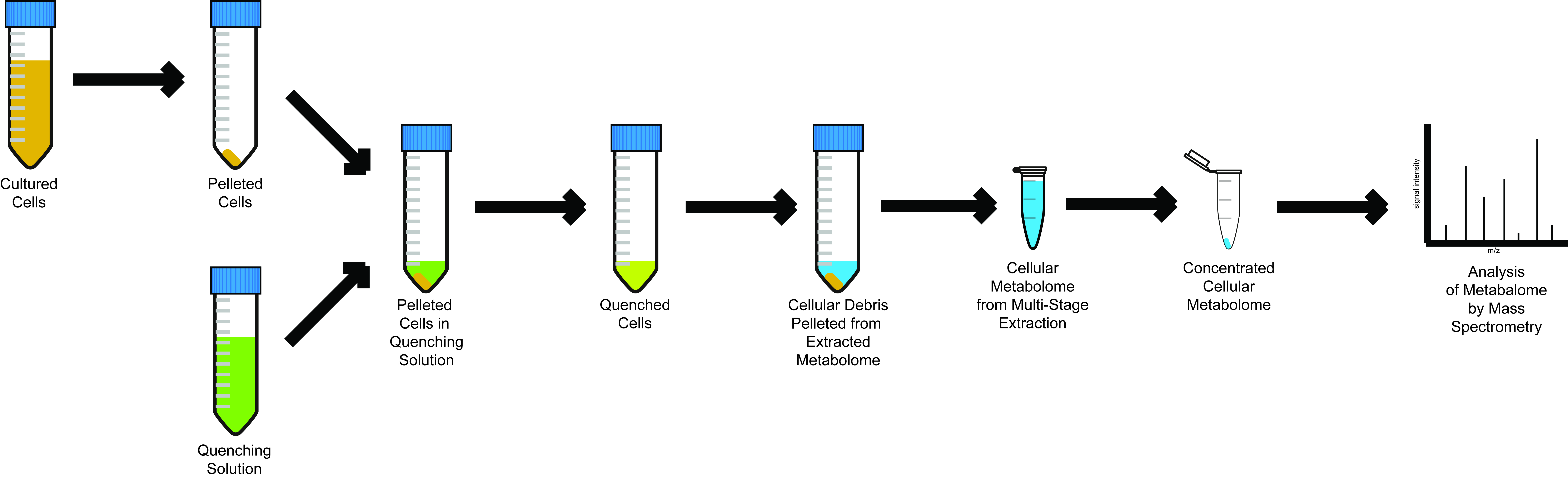 Metabolome Extraction Method.ai